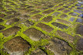 Mossy cobbles wet cobbled road bathed in sunshine Royalty Free Stock Photo
