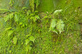Mossy concrete wall Royalty Free Stock Photography