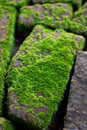 Mossy on damp brick in the morning light Stock Images
