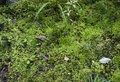 Mossy forest floor new zealand Stock Photo