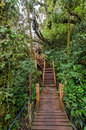 Mossy forest of gunung brinchang cameron highlands wooden pathway in the malaysia Stock Photo