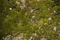 Mossy ground Royalty Free Stock Photo