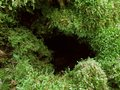 Mossy hole detail of a moss overgrown Stock Image