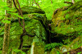 Mossy ledges Royalty Free Stock Photo
