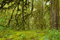 Mossy Oak Forest Haven HDR Royalty Free Stock Photos