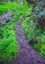 Mossy Path Royalty Free Stock Photo