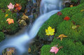 Mossy rivulet Royaltyfria Bilder