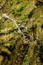 Mossy rock with string old white on the texture pattern Stock Images