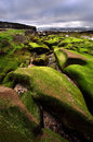 Mossy Rocks at La Jolla Beach Stock Photos