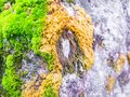 Mossy rustic stone closeup photo texture. Green and yellow moss on stone closeup. Royalty Free Stock Photo