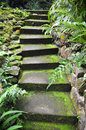 Mossy stairway to paradise moss covered cement stairs in the tropical rain forest section of hawaii Royalty Free Stock Photo