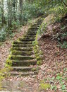 Mossy steps stone heading up the backbone falls trail in tennessee Stock Photos