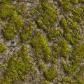 Mossy stone seamless tileable texture see my other works in portfolio Royalty Free Stock Photo