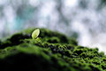 Mossy stone and young green plant with the waterfall background as a Royalty Free Stock Photography