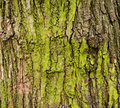 Mossy tree bark closeup of for background Royalty Free Stock Photos