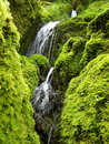 Mossy waterfalls from oregon moss covered rocks split by waterfall Stock Photos