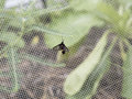 Moth on net in vegetable garden Royalty Free Stock Photo