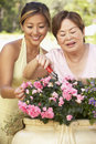 Mother With Adult Daughter Gardening Together Royalty Free Stock Photography