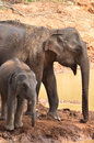 Mother and baby elephant bathing at water hole Stock Photography