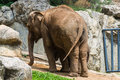 Mother and baby elephant in chiangmai zoo thailand northen Stock Photo