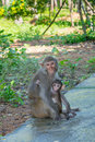 Mother and baby monkey hugs family in a park Royalty Free Stock Photo