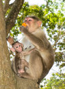 Mother and baby monkey together Royalty Free Stock Photo