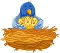 Mother bird and babies birds in nest Royalty Free Stock Photo