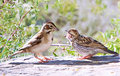 Mother bird and baby Stock Images