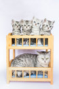 Mother cat with four youngs in bed young kittens Royalty Free Stock Photography