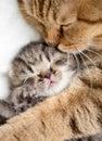 Mother cat hugging kitten