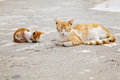 Mother cat and its sleeping kitten little red hiding nose in a ground Royalty Free Stock Images