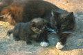Mother cat and kitten lies on sun Royalty Free Stock Photo