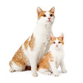 Mother Cat And Kitten Siting Together Royalty Free Stock Photo
