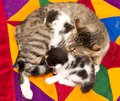Mother cat with small kittens