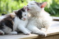 Mother cat washing her kitten Stock Photography