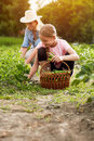 Mother and daughter with basket full of peas in garden Royalty Free Stock Photo