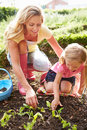 Mother and daughter planting seedlings on allotment wearing pink wellies Royalty Free Stock Photos