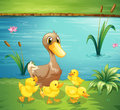 A mother duck with her ducklings in the river illustration of Stock Photography