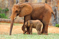 Mother elephant with baby elephant african and Royalty Free Stock Photography