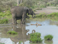 Mother elephant and her baby at a waterhole Royalty Free Stock Photo