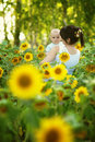 Mother with her son in the field with sunflowers summer Royalty Free Stock Image