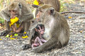 Mother monkey and her little baby Royalty Free Stock Images