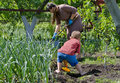 Mother and son working in the vegetable garden her young kindergarten aged together digging weeding between plants summer sun Stock Photo