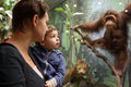Mother tells her son about monkey in zoological museum Stock Photo