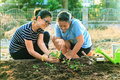 Mother and young daughter planting vegetable in home garden fiel Royalty Free Stock Photo