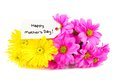 Mothers day flowers happy tag with colorful over white Royalty Free Stock Photography