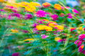 Motion blur flower lantana camara background Royalty Free Stock Photography