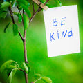 Motivating phrase be kind. On a green background on a branch is a white paper with a motivating phrase.