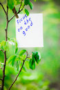 Motivating phrase focus on the good. On a green background on a branch is a white paper with a motivating phrase.