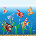 Motley small fishes swim in an aquarium Royalty Free Stock Image
